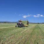 baling pasture