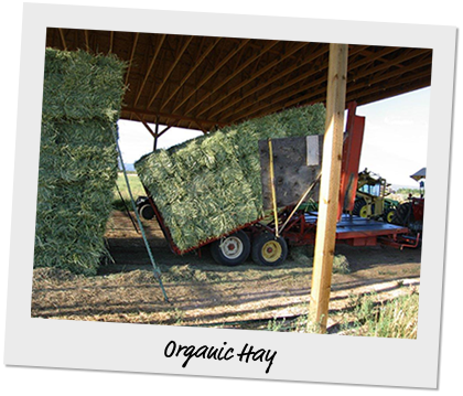 organic hay in a truck